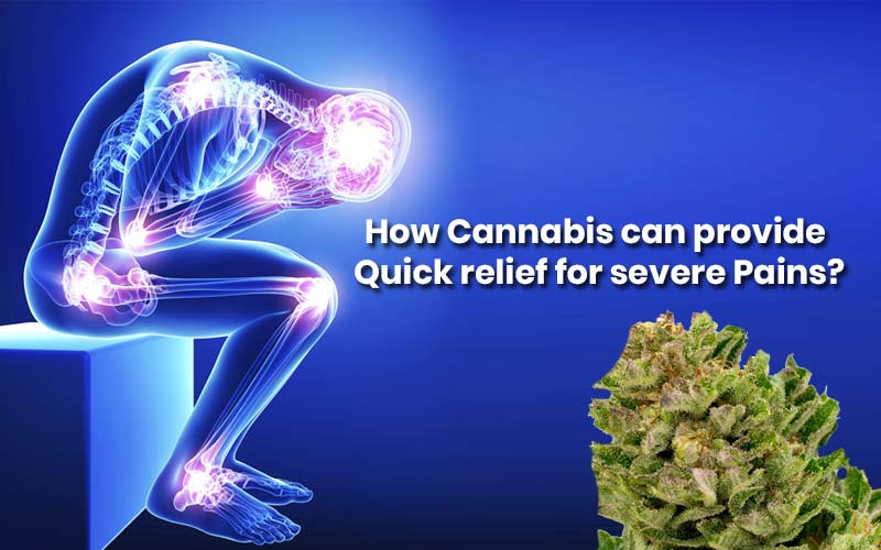 How Cannabis provide Quick relief for severe Pains Image